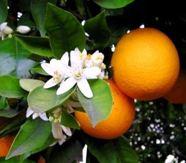 fiori-arancio