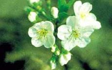 anteprima TipsTricks I fiori di Bach