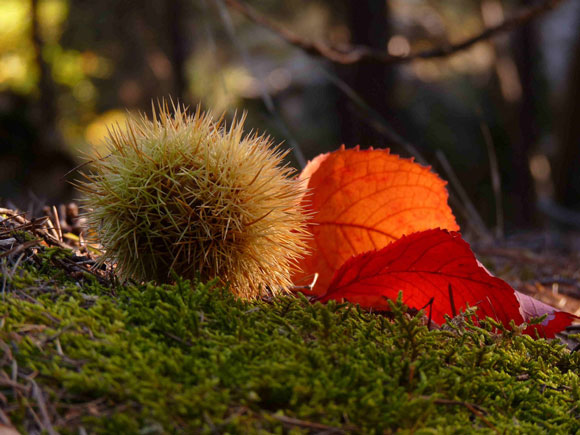 profumo-autunno