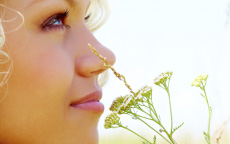 Viaggi olfattivi