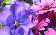 anteprima primavera profumi