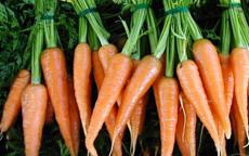 anteprima carote