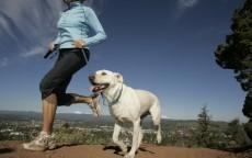 Sport da fare con il cane evi